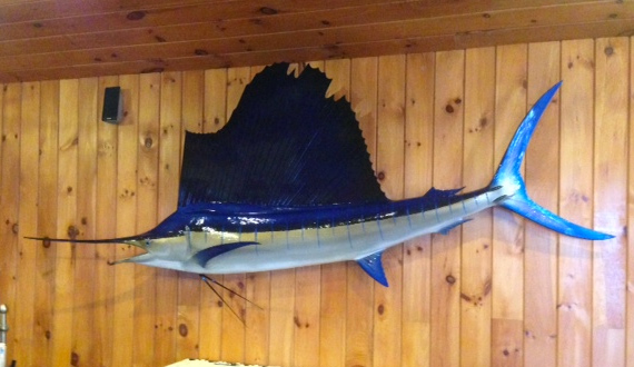 Atlantic sailfish mount sailfish replica for Global fish mounts