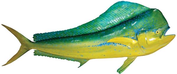 Bull dolphin dorado mahi fishmount for Global fish mounts