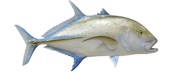 Giant trevally ulua fishmount for Global fish mounts