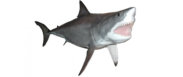 Great white shark fishmount for Global fish mounts
