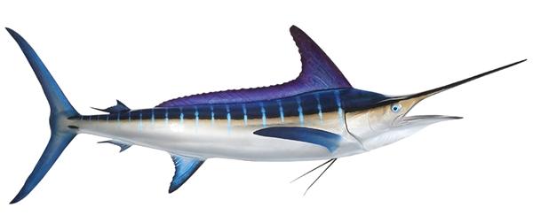 Striped marlin fishmount marlin fish replica for Global fish mounts