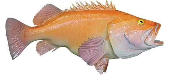 Yellow eye rockfish fishmount for Global fish mounts