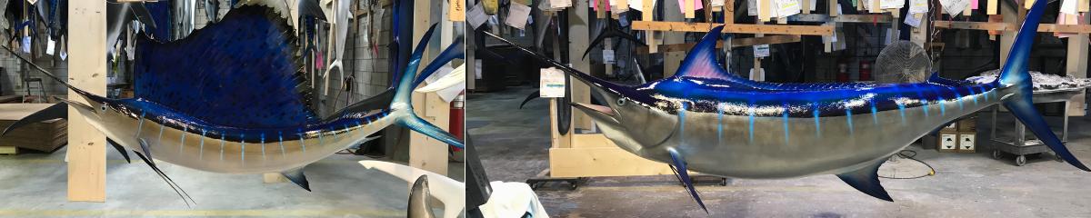 billfish mounts | global fish mounts | mounted billfish fish
